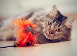 gatto-comportamento