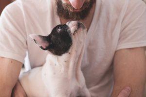 cane e padrone uguali 2