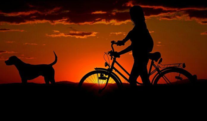 cane e padrone uguali 4