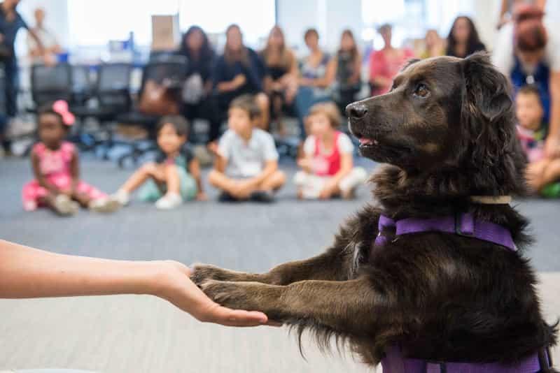 educare il cane 4