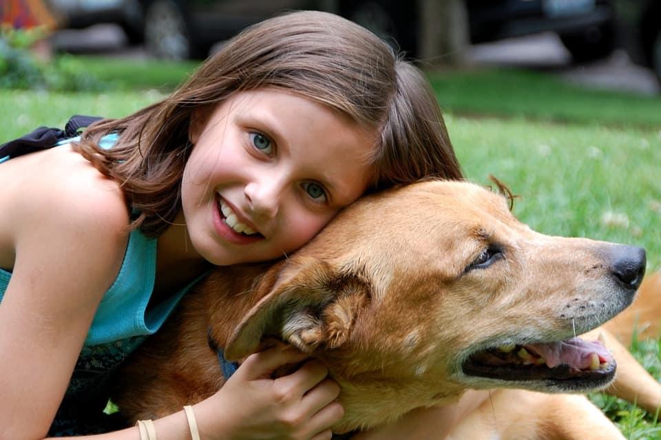 Educare il cane perch importante farlo nel modo giusto - Educare il cane a non salire sul divano ...
