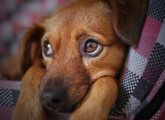 fobie nel cane