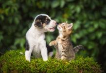 apparato digerente di cane e gatto