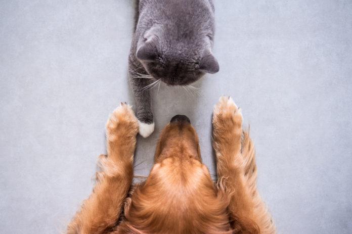apparato tegumentario di cane e gatto