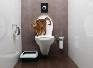 cassetta igienica