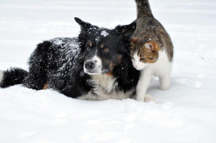 emergenza maltempo e animali
