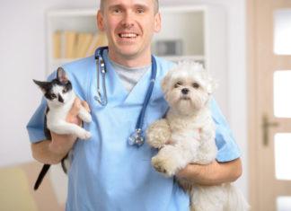 parassiti gastrointestinali_veterinario con cane e gatto