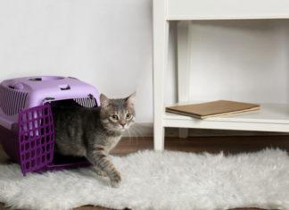 territorio di un gatto