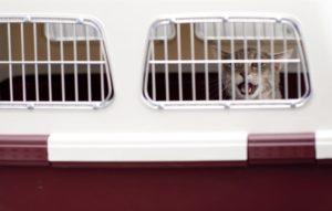 trasporto di animali 3