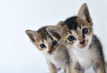 2 gattine