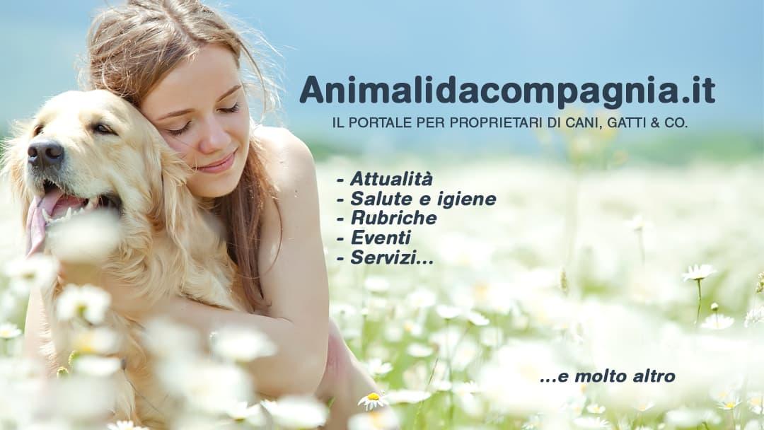 animalidacompagnia.it editoriale