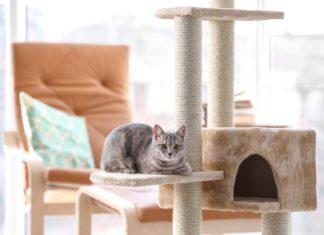 casa per gatti