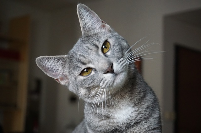 gruppi sanguigni nel gatto