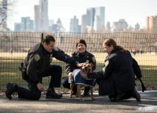 polizia di new york salva un cane