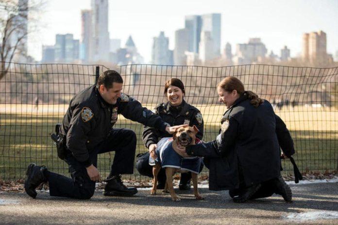 polizia di new york salva un cane