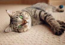yuri gatto