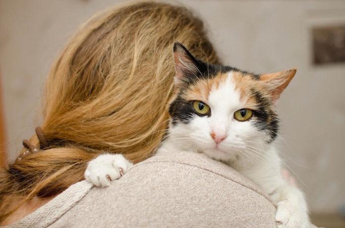 zoonosi del gatto