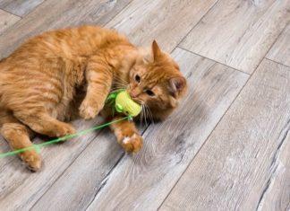 giochi pericolosi per il gatto