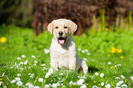 Brasile Il Cane Che Aspetta Ogni Giorno Il Suo Padrone