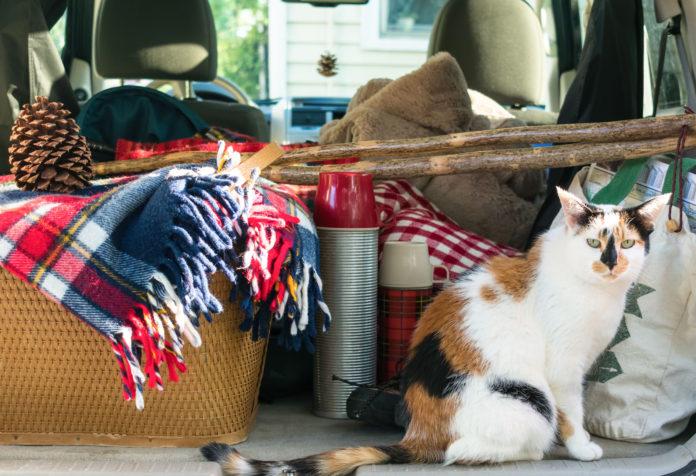gatto campeggio