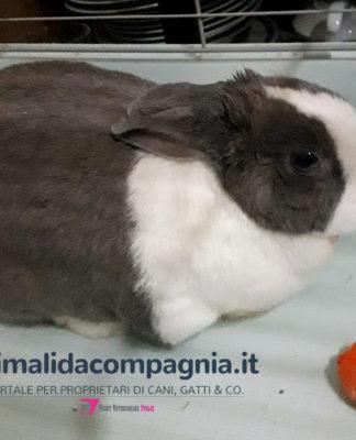 Baffy coniglietta di 10 anni