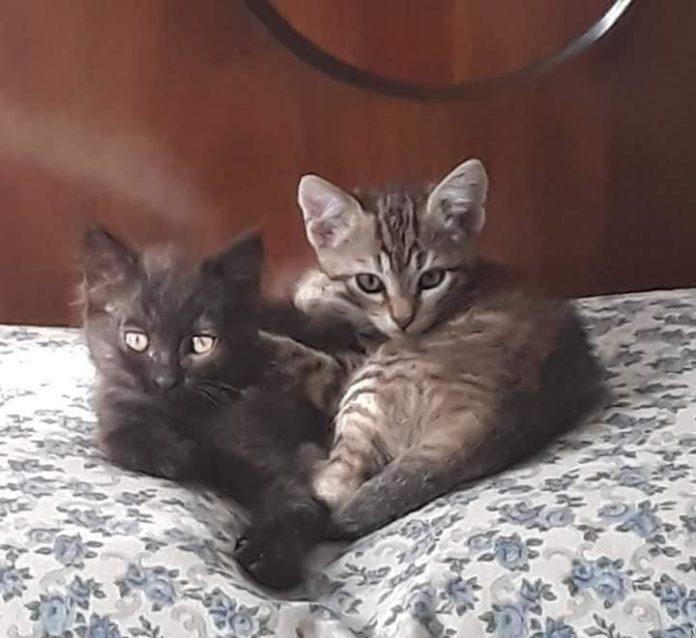 Pepe e Milù