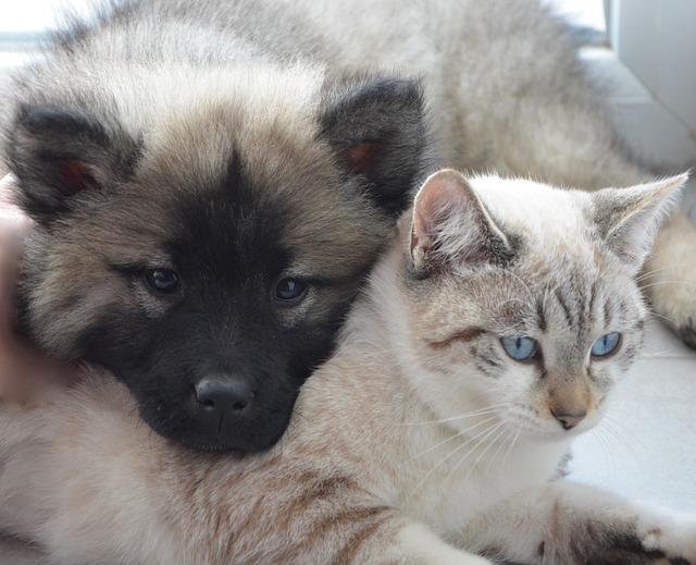 Lintelligenza Nel Cane E Nel Gatto