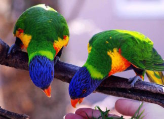 piante pericolose per gli uccelli
