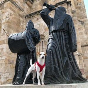 turismo dog friendly 3