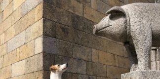 turismo dog friendly