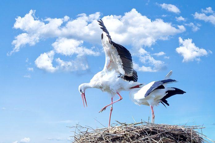 Il volo della cicogna
