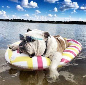 al mare con il cane-4