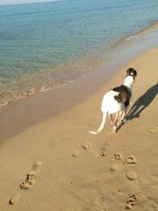 al mare con il cane-5
