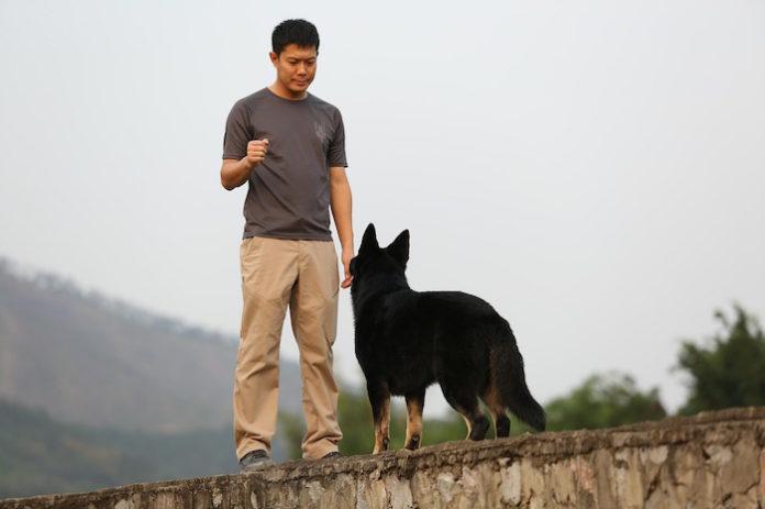 cane da lavoro