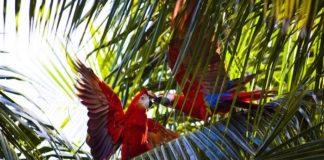 pappagallo in vacanza