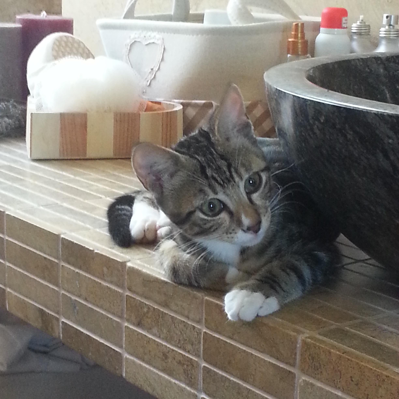 Leo si fa bello in bagno - 94 si fa in bagno ...