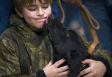 baciare un animale domestico