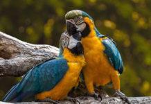 pappagallo in viaggio