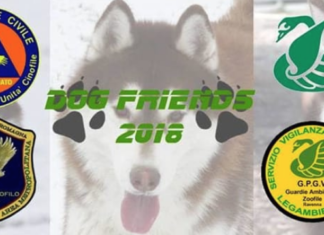 Dog Friends 2018