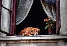 assicurazioni per gli animali domestici