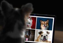 cani più popolari su instagram