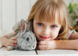 come vede un coniglio