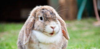 sterilizzazione del coniglio