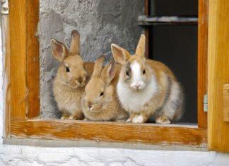 casa a prova di coniglio
