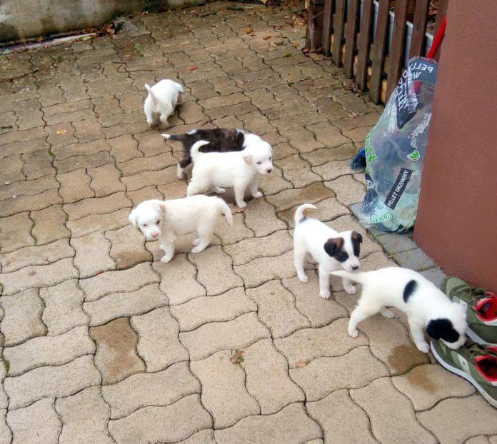 cuccioli meticci 2