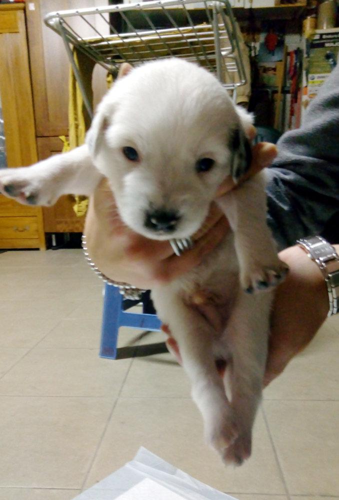 Regaliamo splendidi cuccioli sia maschi che femmine for Nomi per cani maschi taglia piccola