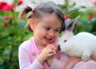 digestione nel coniglio