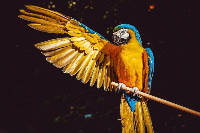 educare il pappagallo