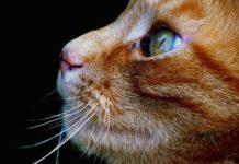 proprietario di un gatto