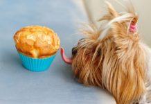 zuccheri ai cani